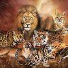 80f44d848e70cf226f71-avatar-image-100x