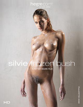 Silvie Gefrorener Busch