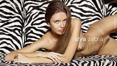 Alya zebra