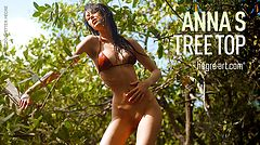 Anna S copa de árbol