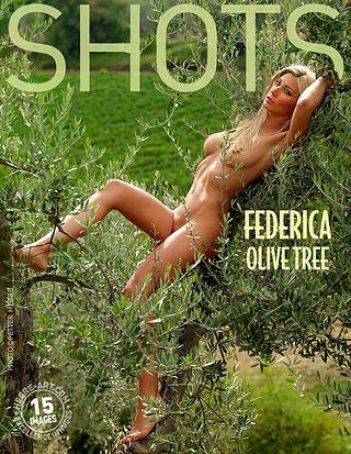 Federica olive tree