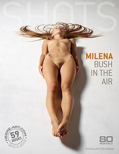 Milena bush in the air
