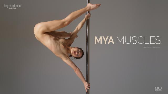 Mya muscles