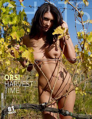 Orsi harvest time