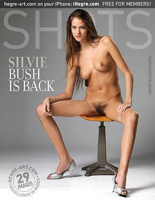 Silvie bush is back