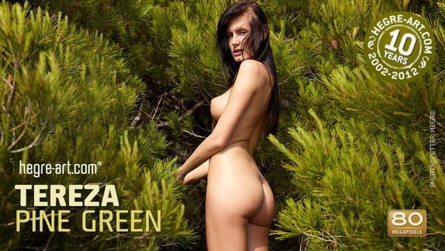 Tereza verde pino