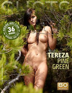 Tereza pine green