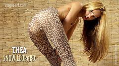 Thea snow leopard