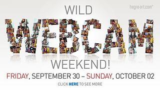 Wild Webcam Weekend - CUM WITH US!!